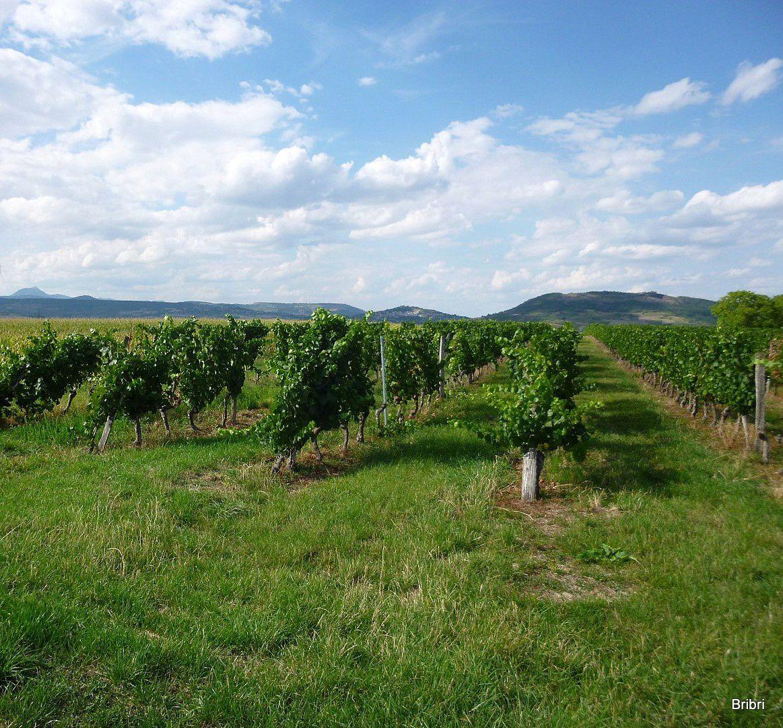 Nous apercevons Montpeyroux et sa tour ainsi que la citadelle de Buron. Pas mal de vignes dans ce coin viticole.