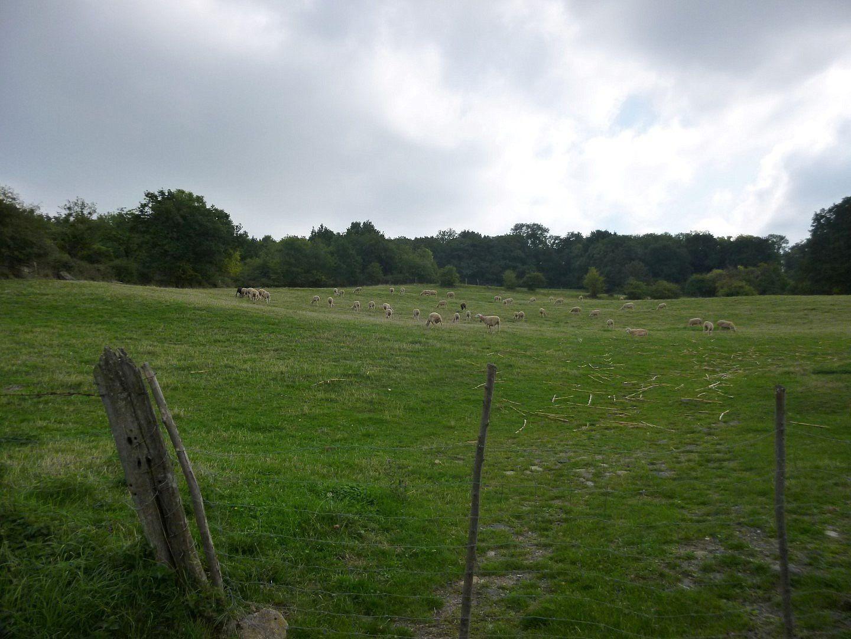 On passe près d'une ferme avec plein de bovins, je vous dis pas les odeurs !