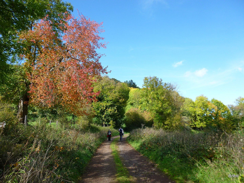 La nature prend ses couleurs d'automne, bien différentes suivant les arbres.