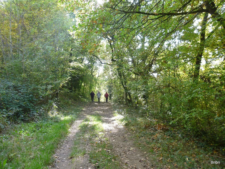 Passage agréable en forêt, on prend son temps dans les groupes.