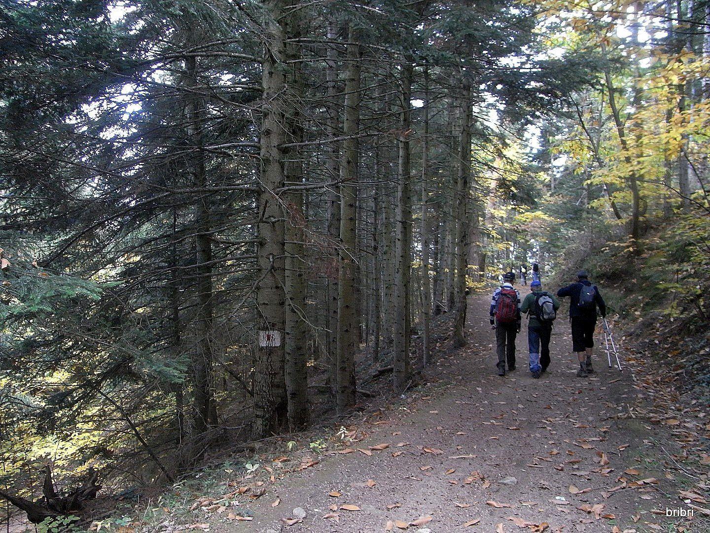 On apprécie de marcher au milieu des couleurs d'automne.