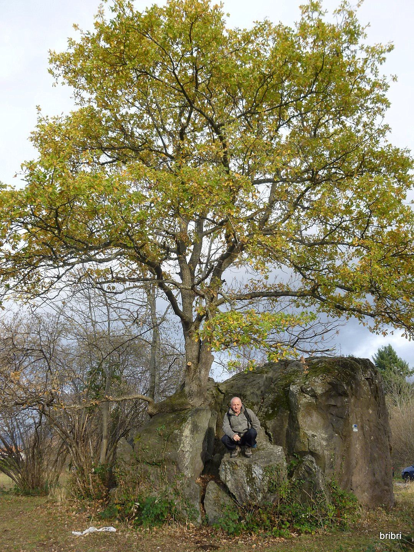 Curieux cet arbre dont les racines sont incrustées dans le rocher.Gérard prend la pause.