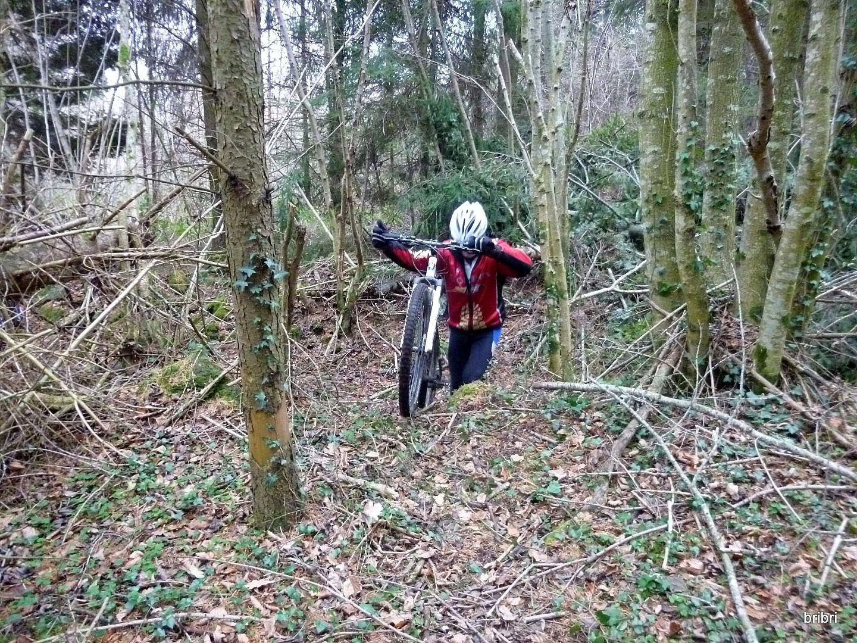 Nous prenons ce sentier, barré par un arbre déraciné, passage difficile pour marcheurs et vététistes.
