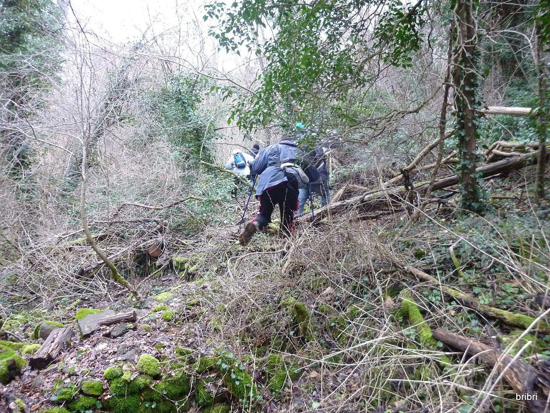 Voici le passage dans les arbres et les branches avant de retrouver le chemin, pas facile nos marches, on s'amuse pas!!!