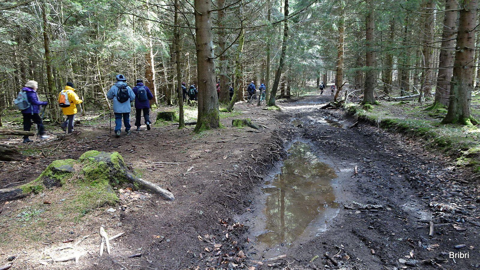 La petite montée en forêt donne chaud, on quitte une pelure.