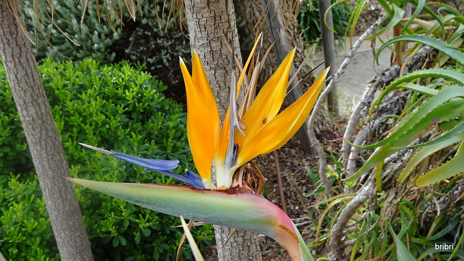 Visite de Bormes le lundi. Je vous laisse découvrir la ville et toutes ses fleurs. Le mimosa était passé, dommage.