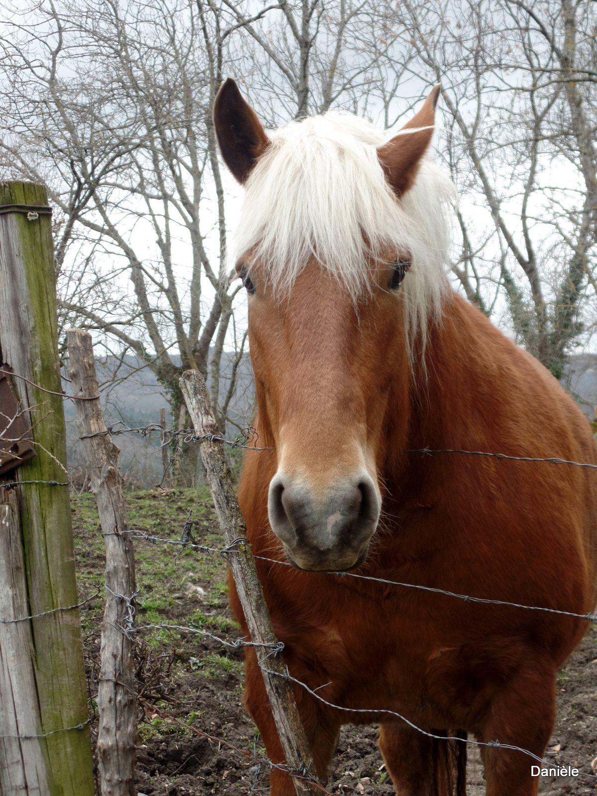 Pauvres bêtes, elles vont finir dans nos assiettes, sauf ce beau cheval (enfin j'espère).