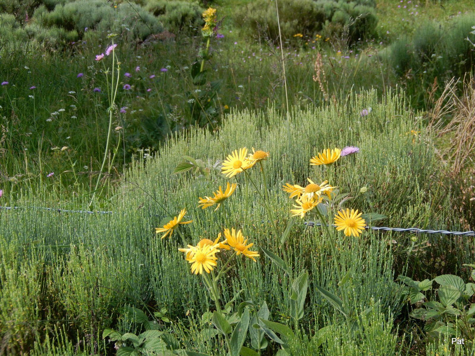 Des fleurs qu'ils ont côtoyé durant leur balade: des digitales, orchidées, anémones ....Bravo à tous !