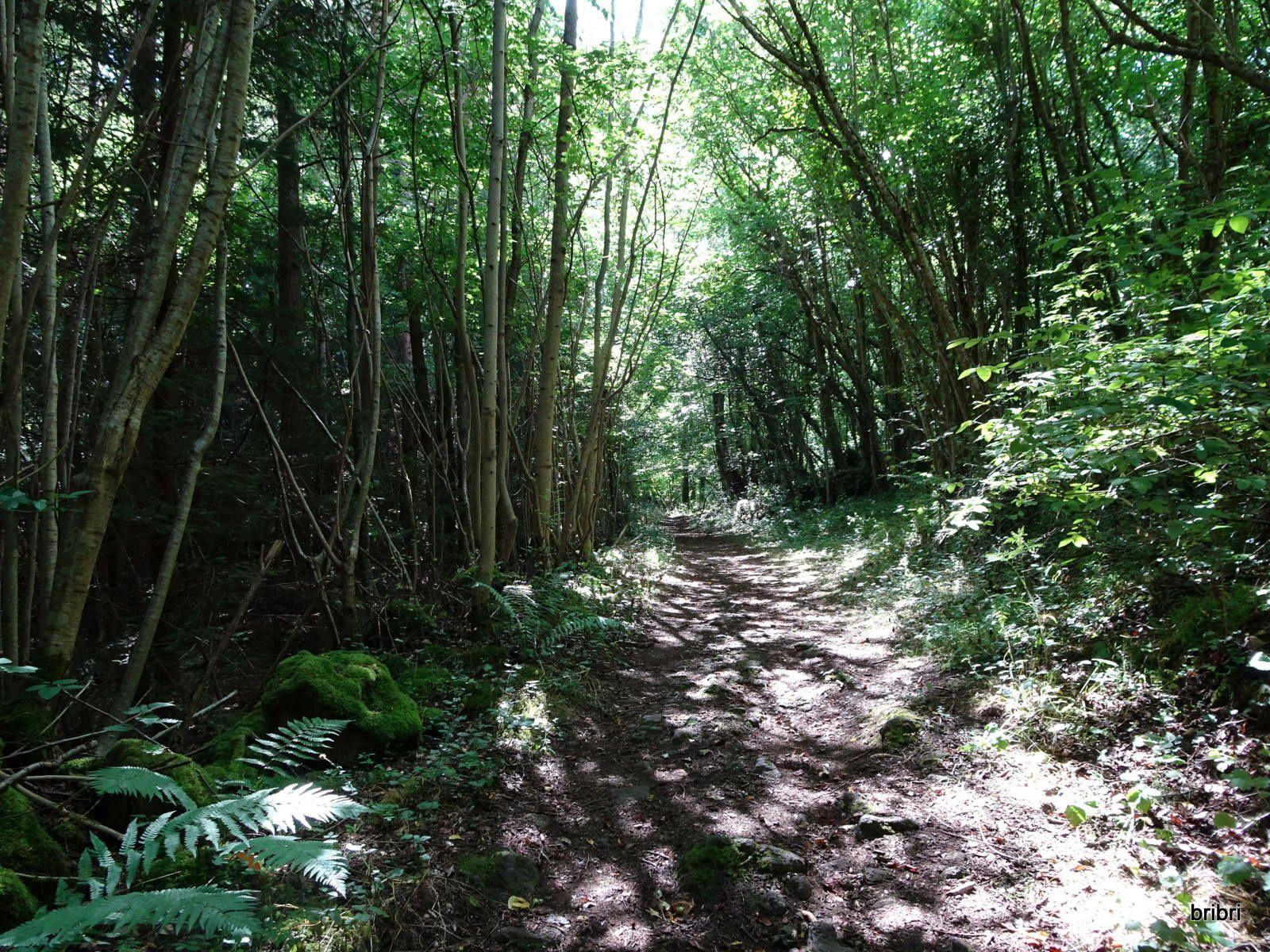 Toujours ce petit sentier agréable avec un mur de pierres sèches.