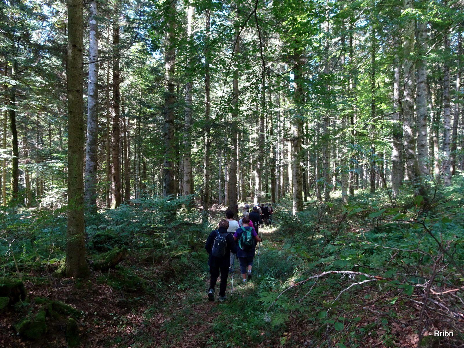 La descente continue en forêt.