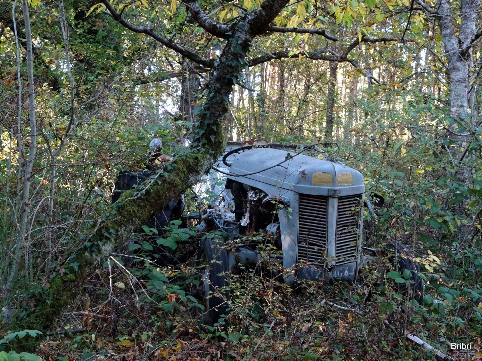 Voici ce que nous découvrons au milieu des bois, aux abords du chemin, quel dommage tous ces détritus.