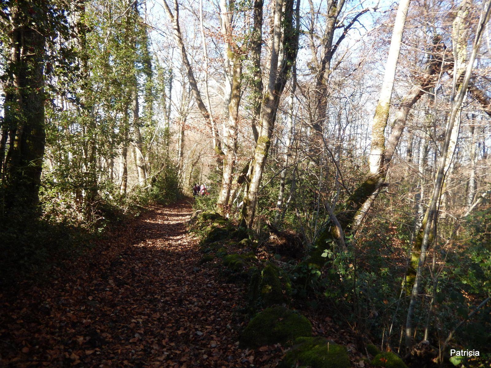 On monte d'abord un peu à travers les bois.