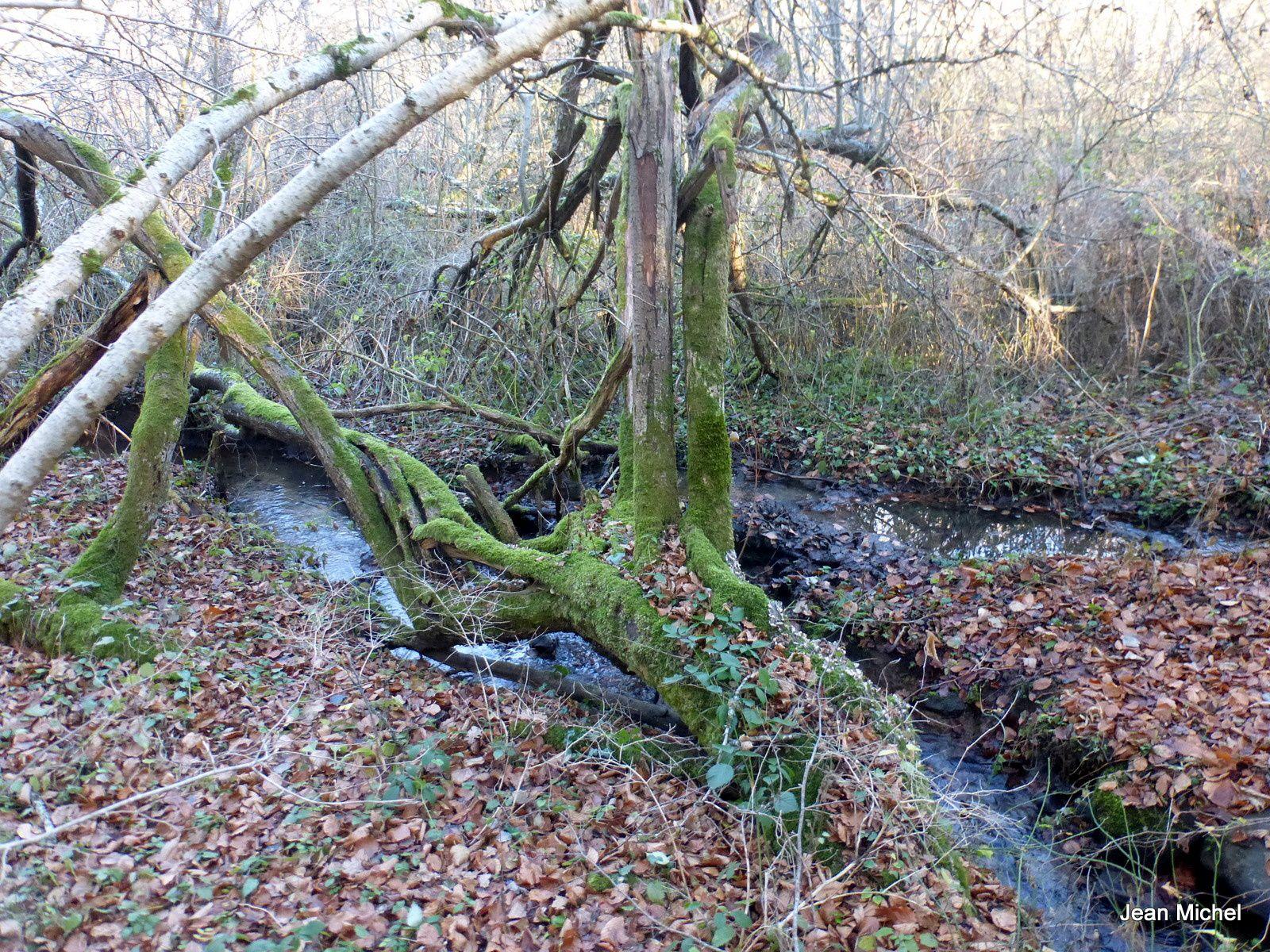 On redescend, on longe un ruisseau , parcours bien aménagé.