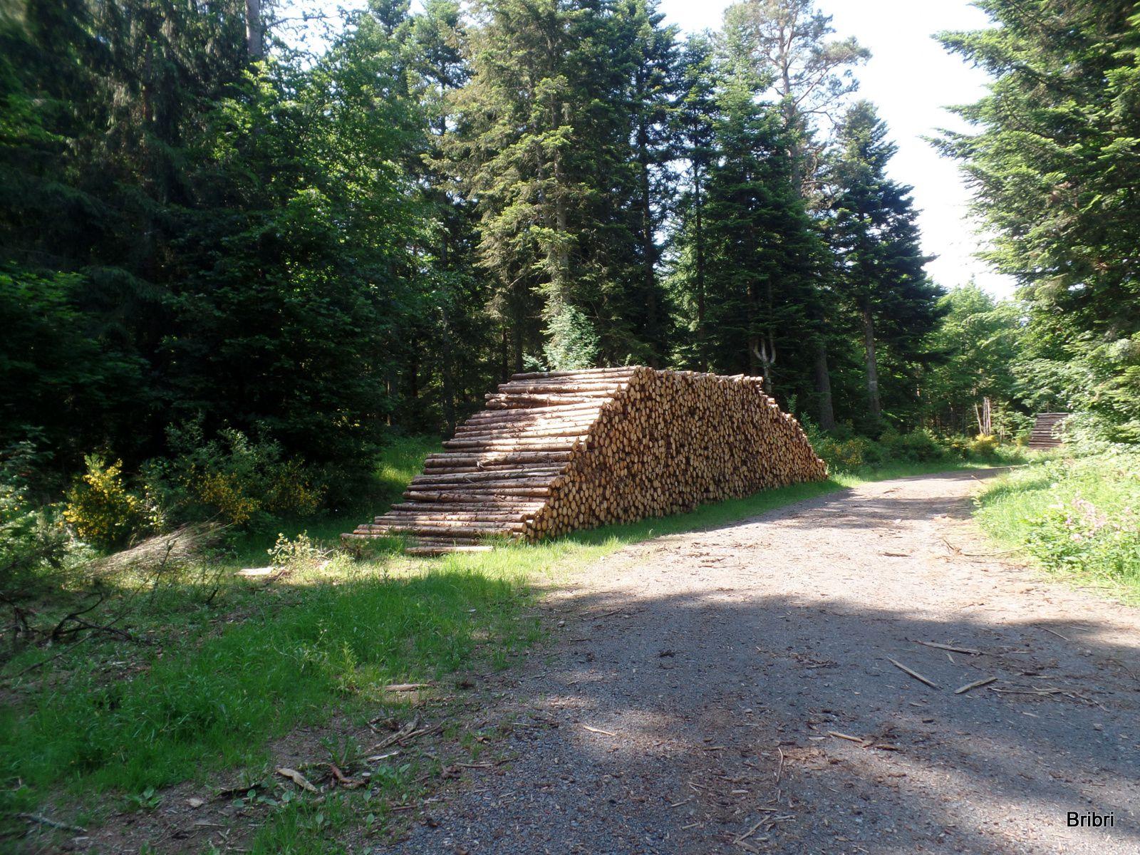 Ce tas de bois va servir de repère, ils le retrouveront après avoir fait une boucle.