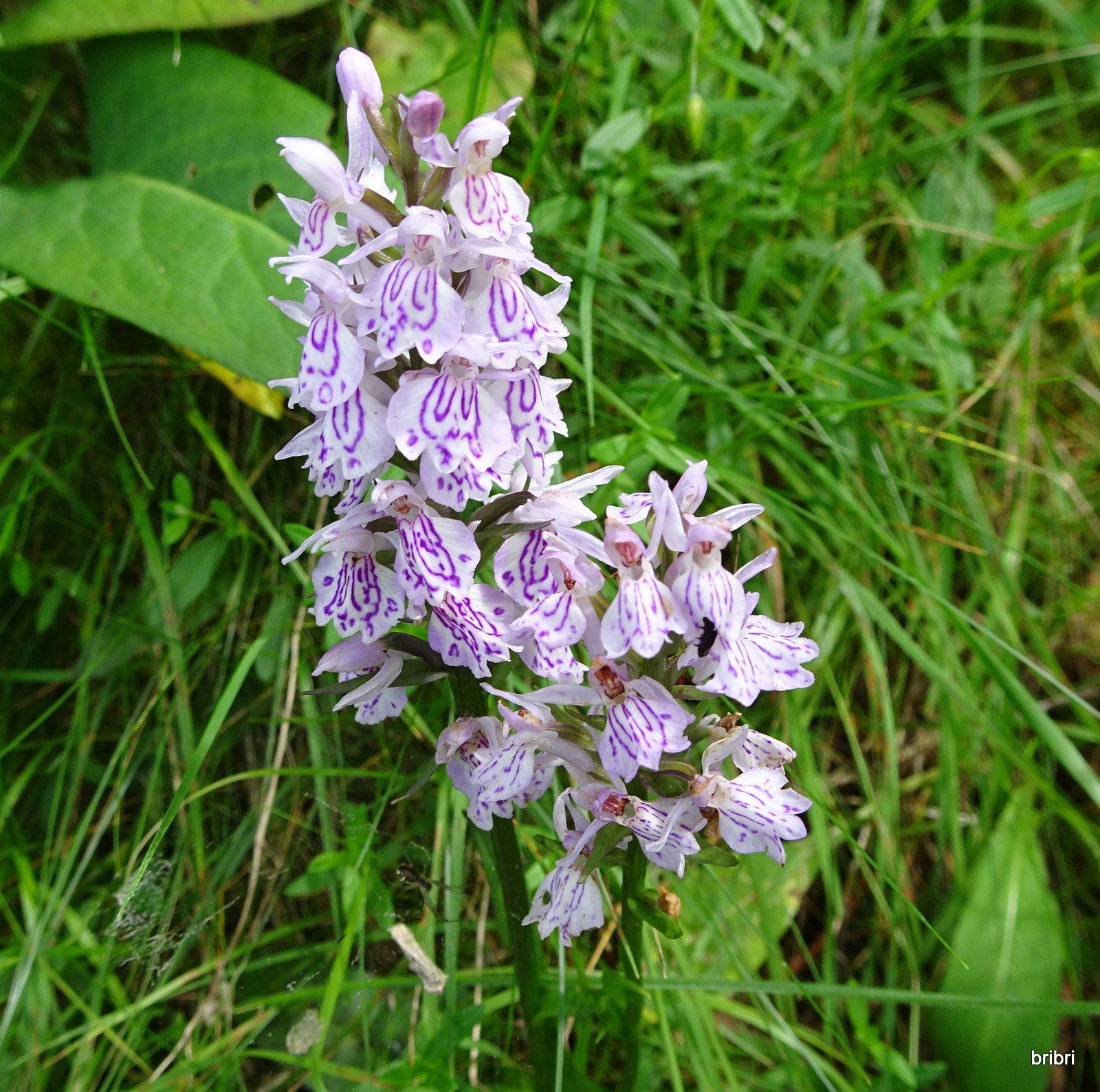 Sur le parcours de belles fleurs de la famille des orchidées.