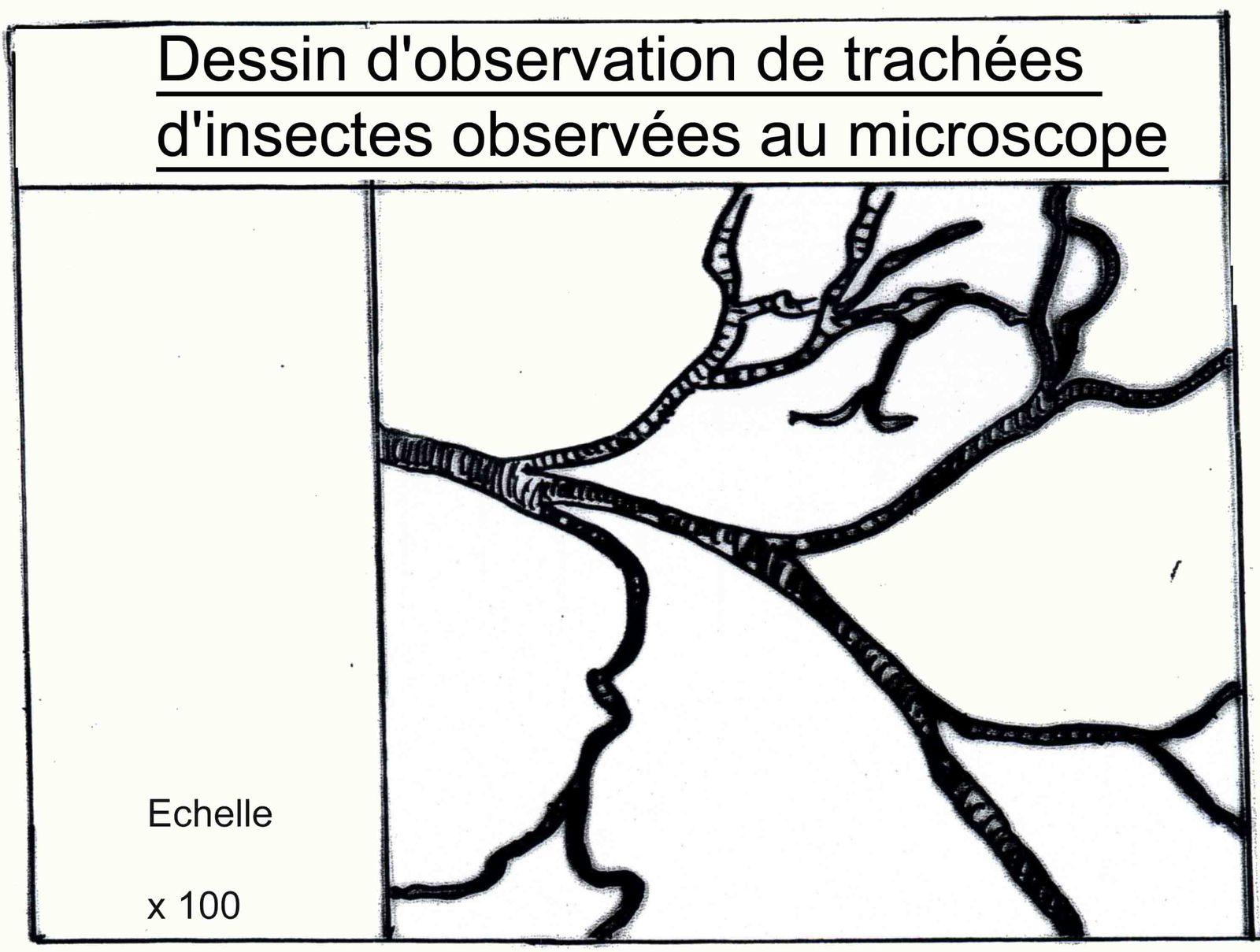Dessin d'observation
