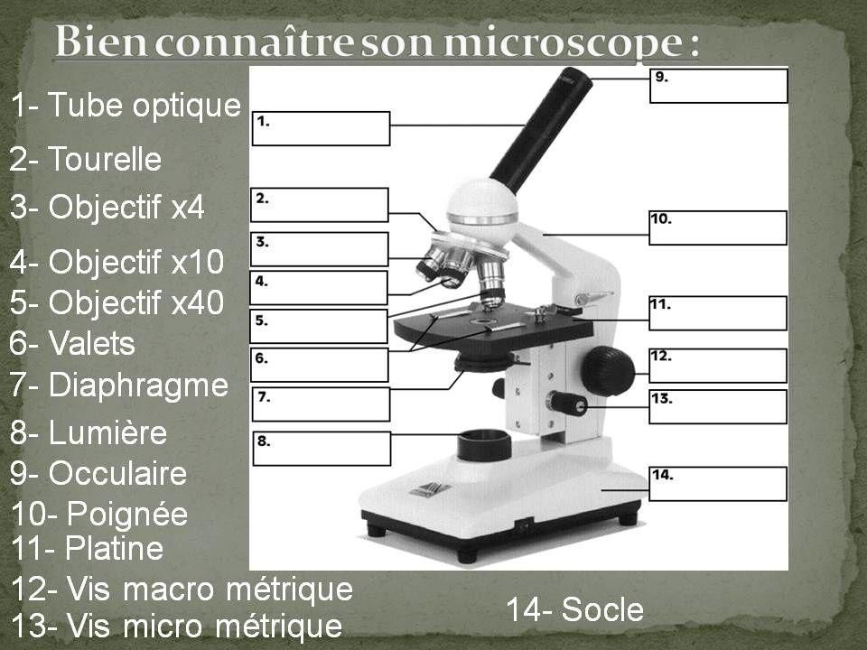 Fiche méthode : Le microscope