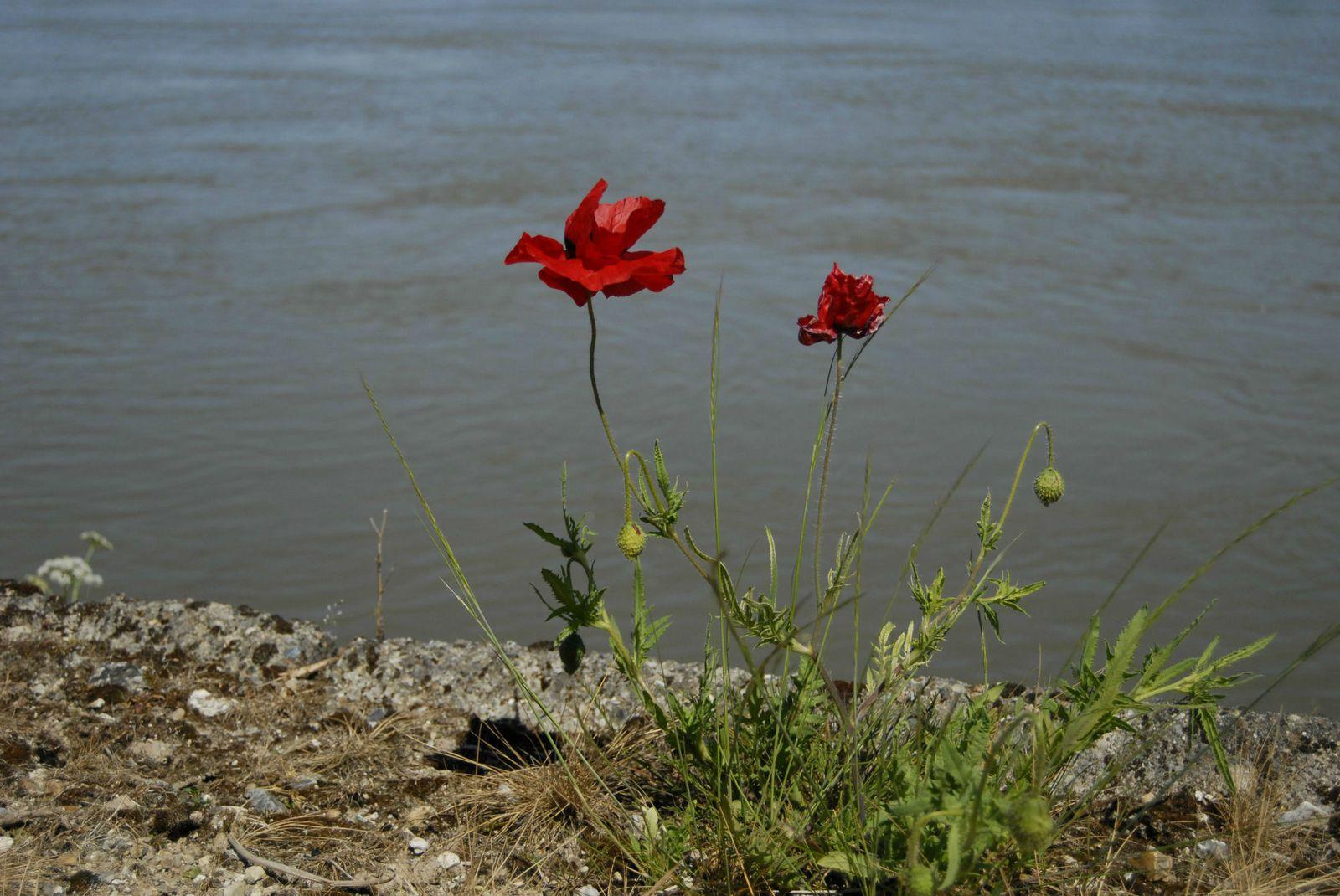 l'insolite en bord de Seine