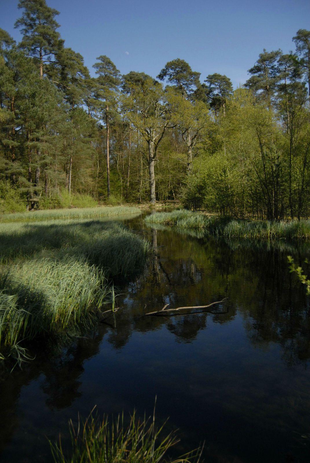 la mare Tonne est située au Nord-Ouest de la Forêt de Brotonne, la Mare Tonne est l'une des plus importantes de ce vaste massif forestier.