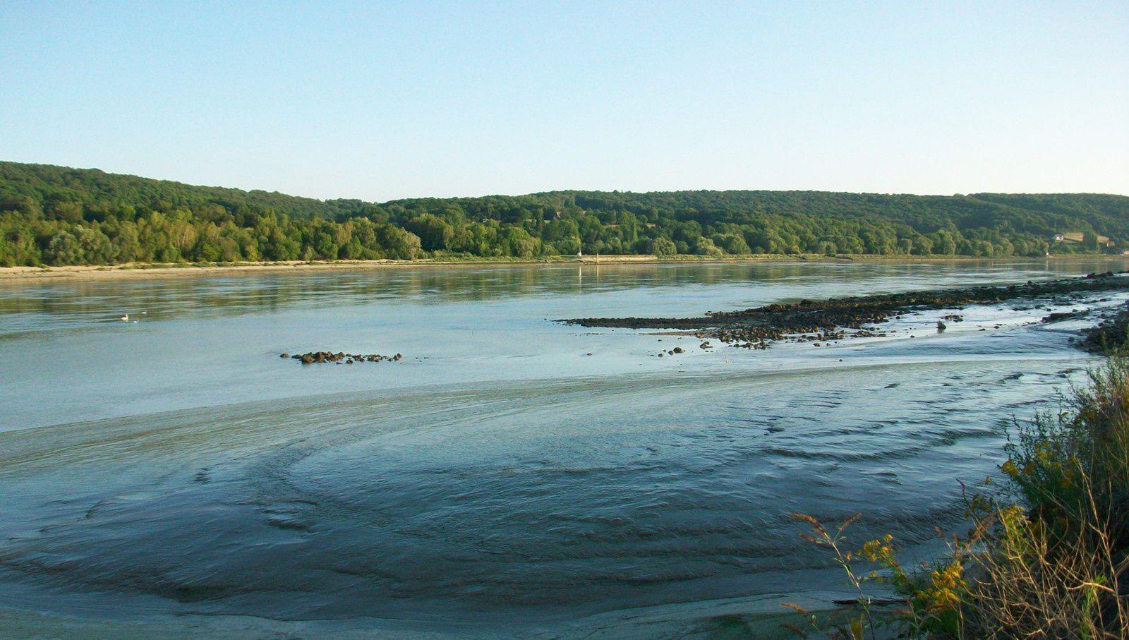 la Seine sauvage des deux rives côté Petiville