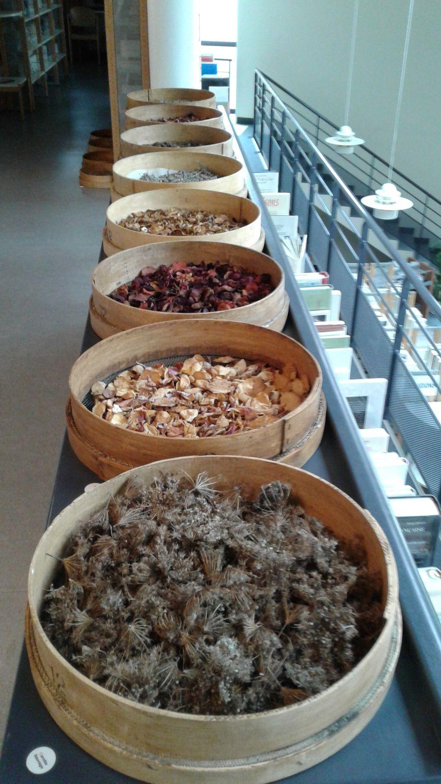 Jardin sensoriel, l'odorat à la Médiathèque Lillebonne  - Caux Vallée de Seine: 120 tamis installés