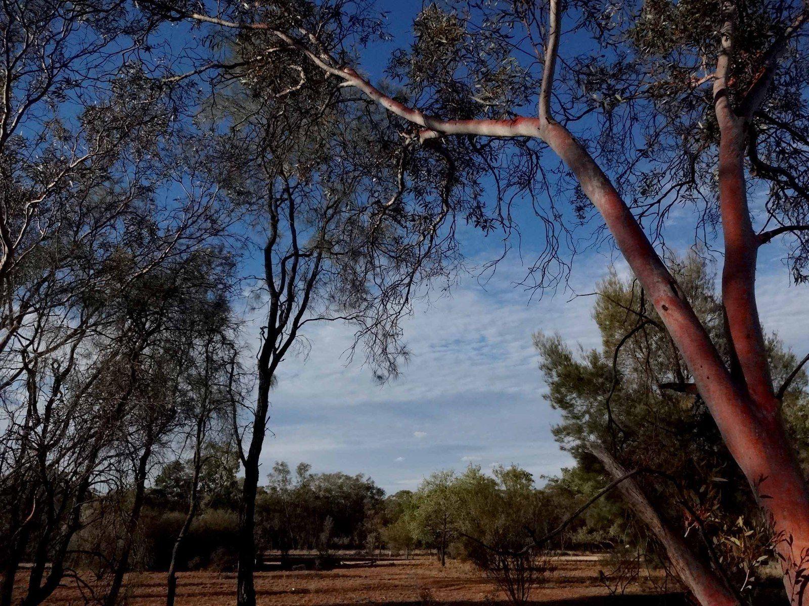 5 jours dans le bush - partie 2