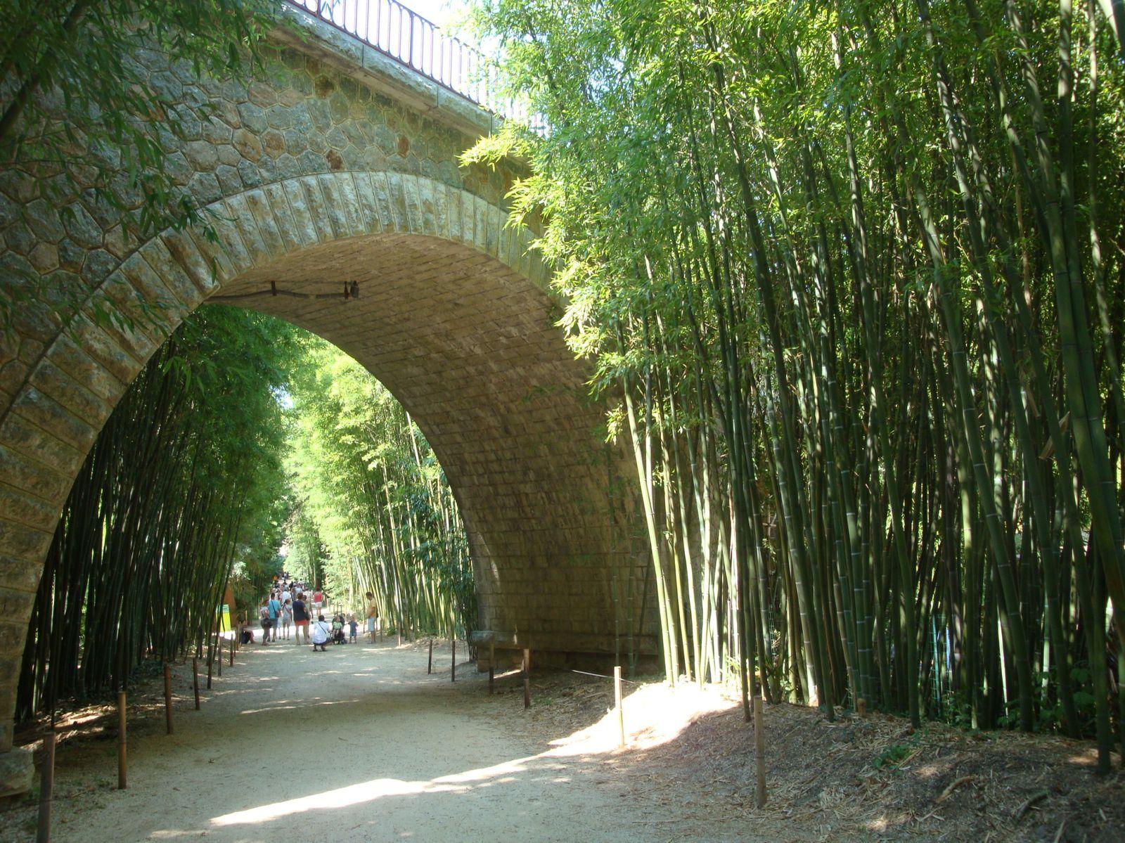 Le train des cevennes et la bambouseraie