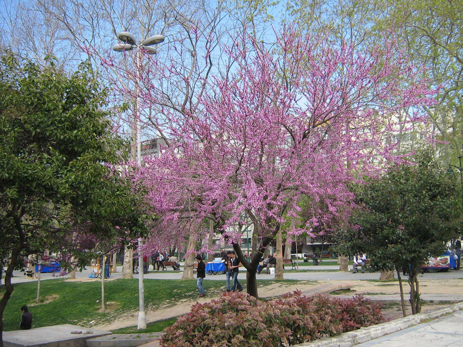 Le parc de Gezi, à nouveau paisible