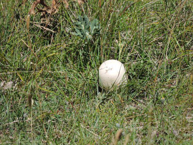KEZACO!!!!!!!!!! cette grosse boule blanche au milieu des herbes