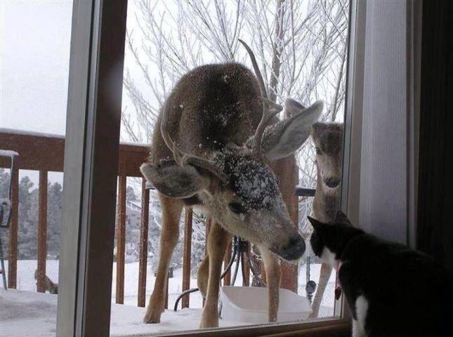 Amici animali (foto)