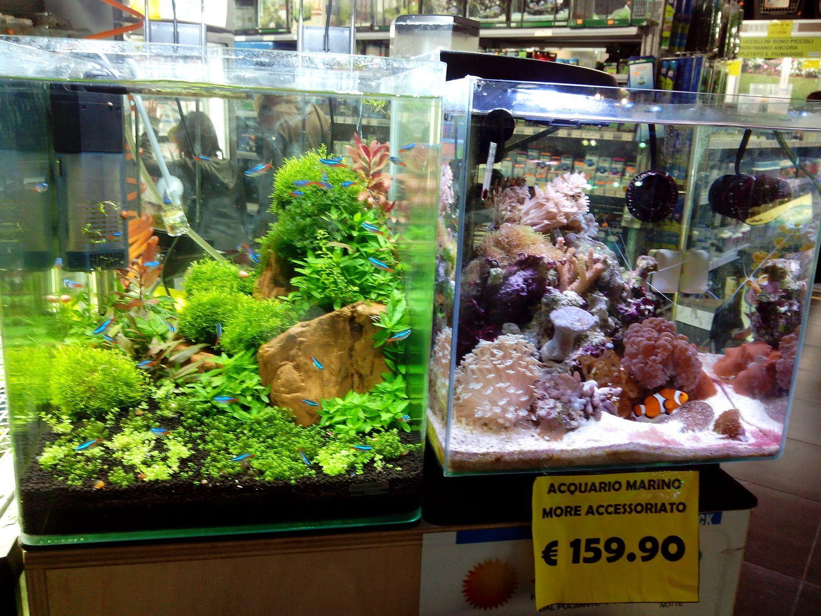 Vizita la MobyDick Acquari e Animali(Fiumicino-Parco Leonardo)