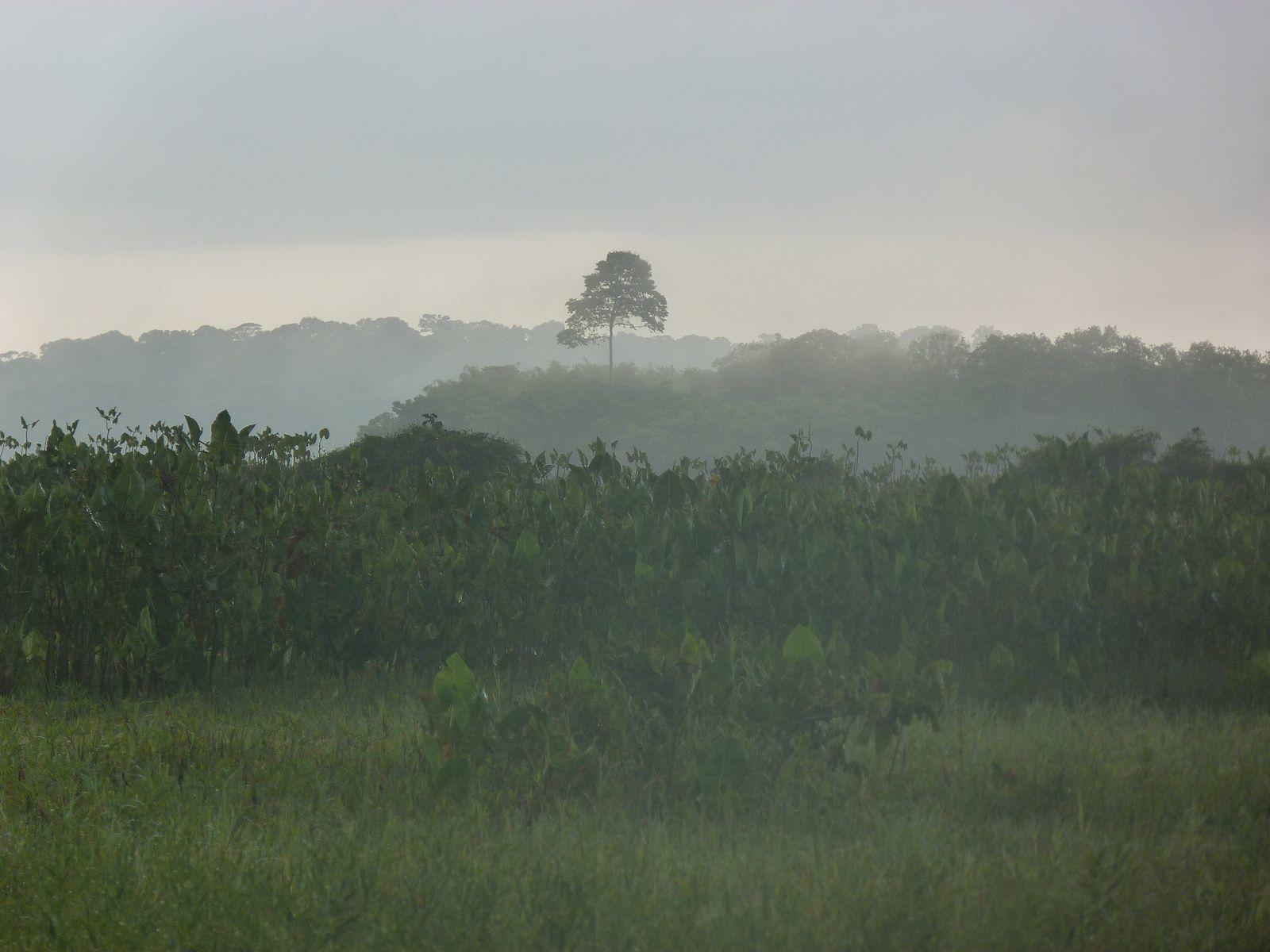 Lever du jour sur les Marais de Kaw