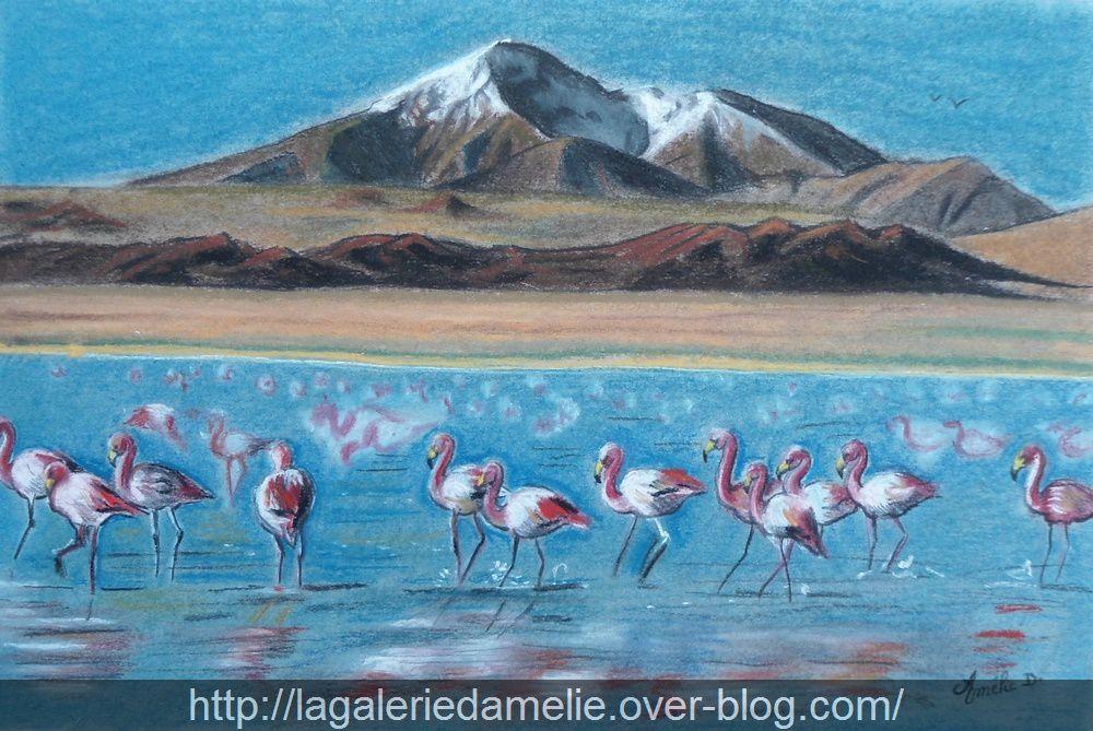 Flamants roses, Laguna Canapa, désert de l'atacama, Bolivie