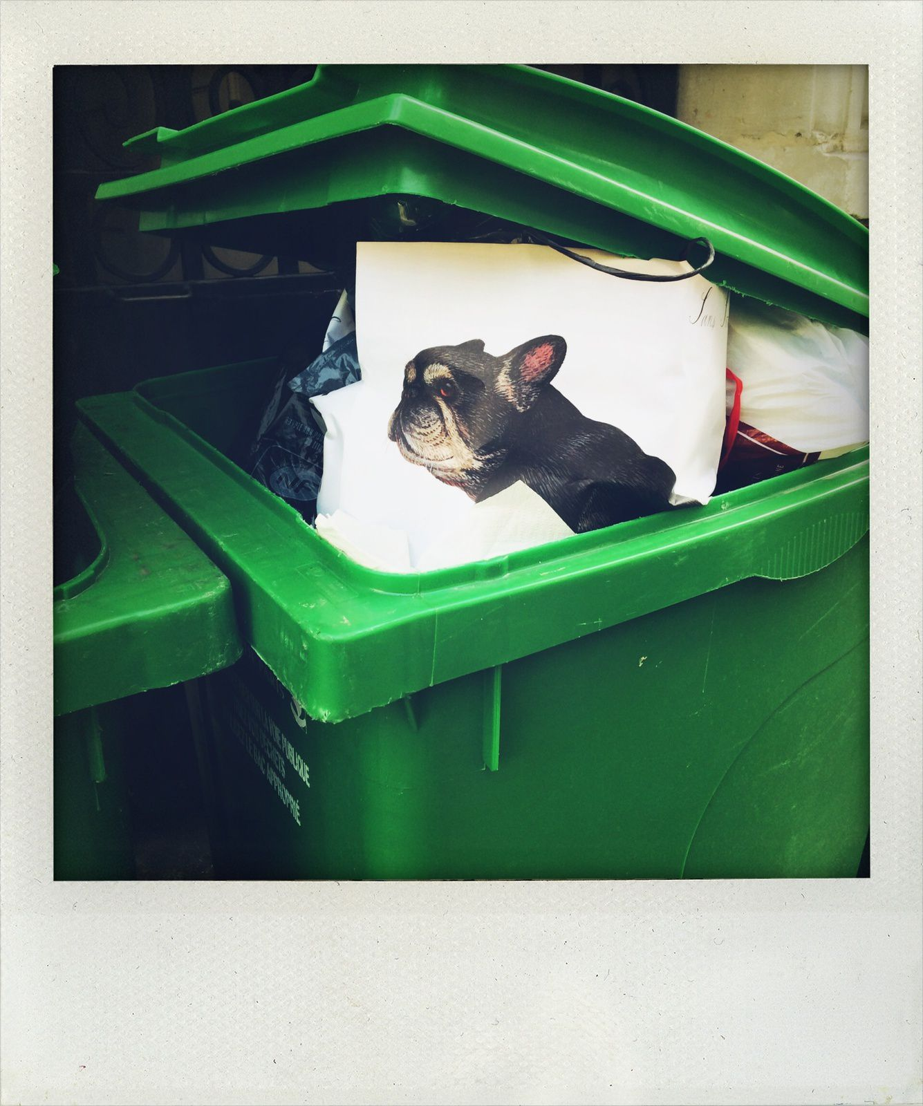 Dog in the dustbin