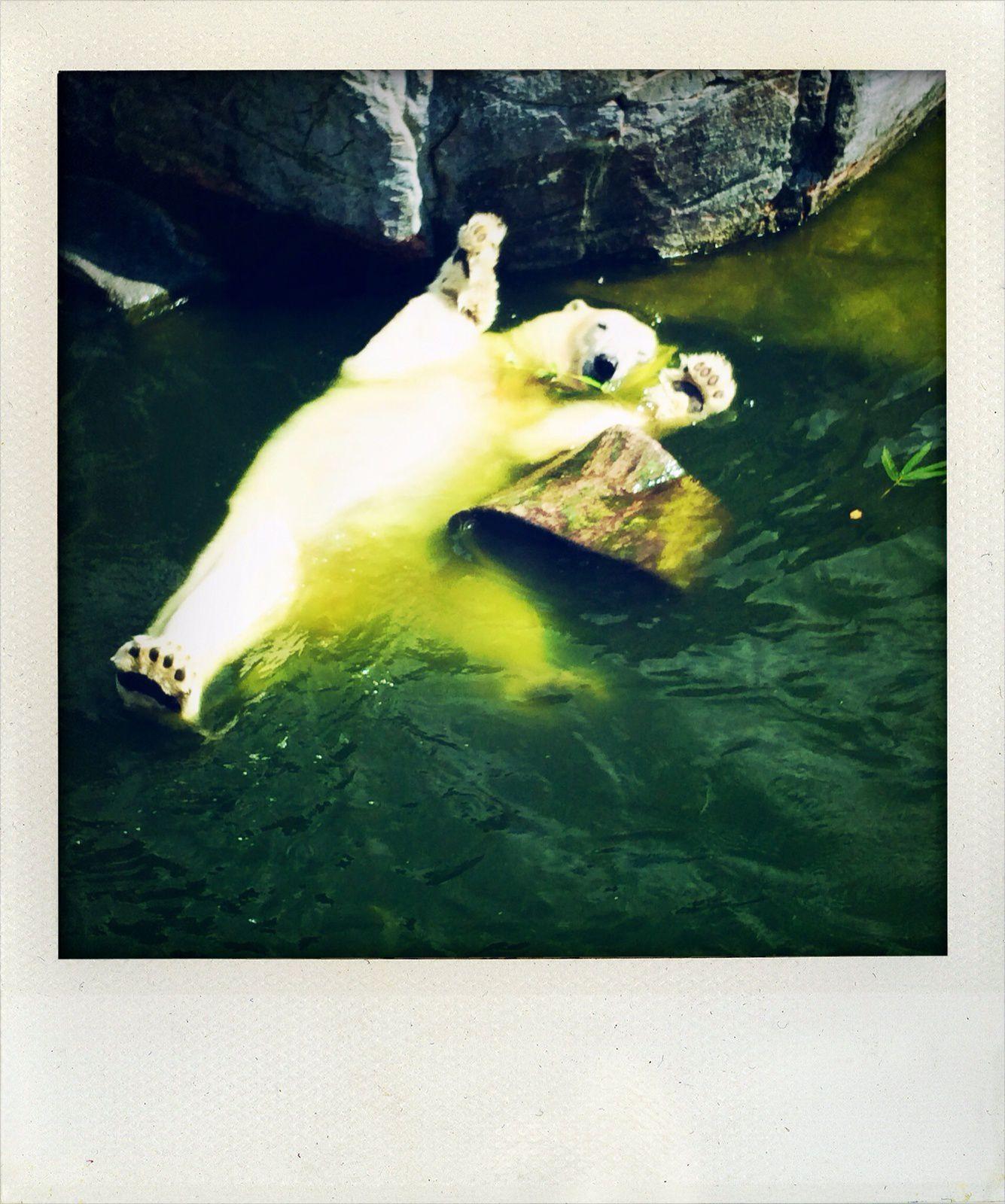 Un vrai bonheur cette peluche de 3 mètres qui s'ébat dans l'eau fraiche