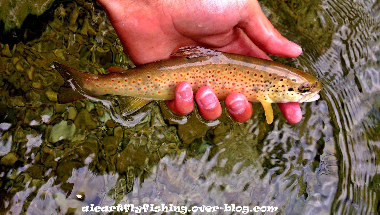 Baja el nivel del agua, Se activan los peces, Nosotros disfrutamos.