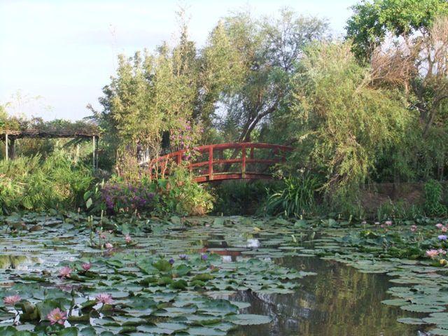 Le jardin de ....莫內的花園