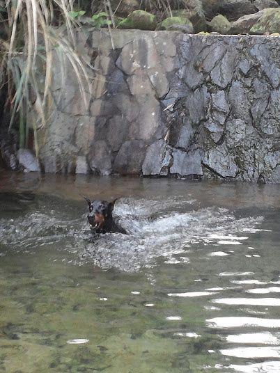 Premières grosses chaleurs, premier bain 夏天快到了