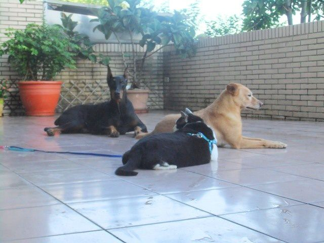 Chats, chiens et insectes 狗貓和昆蟲
