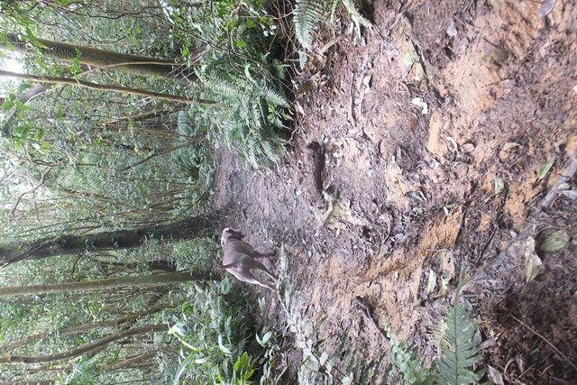 MOI ET UGO DANS LES BOIS 我跟雨果在森林裡