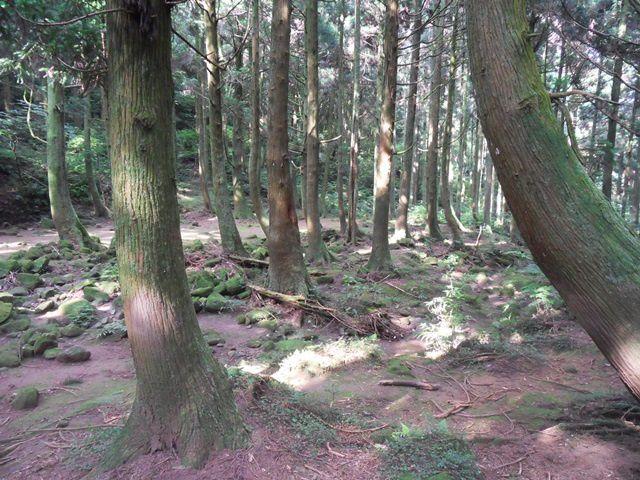 Les pâturages de Qingtiangang (1) 風櫃嘴-頂山-石梯嶺
