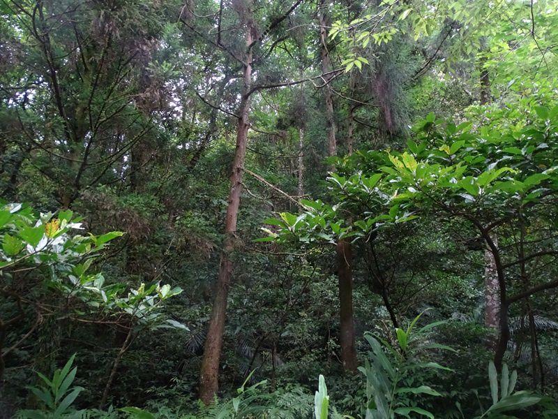 BOIS DE PINGHU, CIGALES ET PAPILLONS 平湖森林