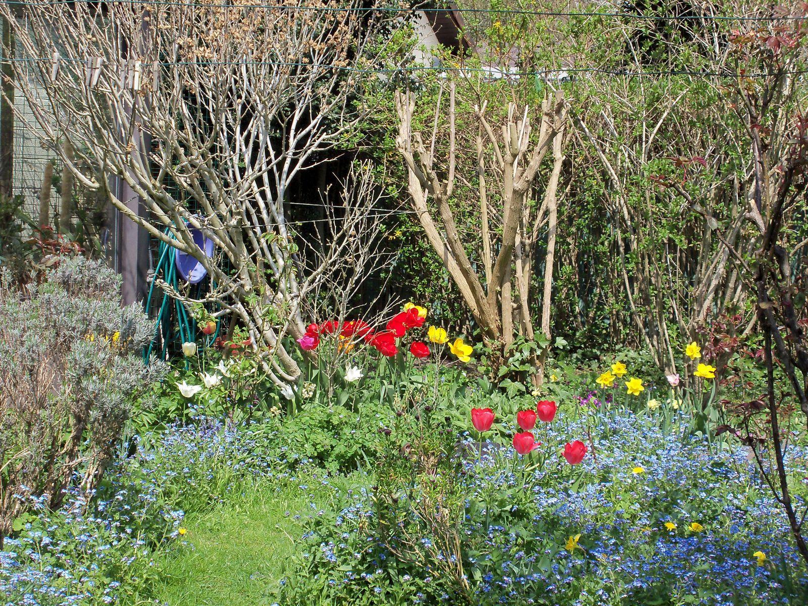 Juste un petit aperçu de mon jardin hier après-midi par une belle journée de Printemps enfin revenu !!