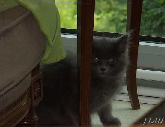 Rouen - le petit chat