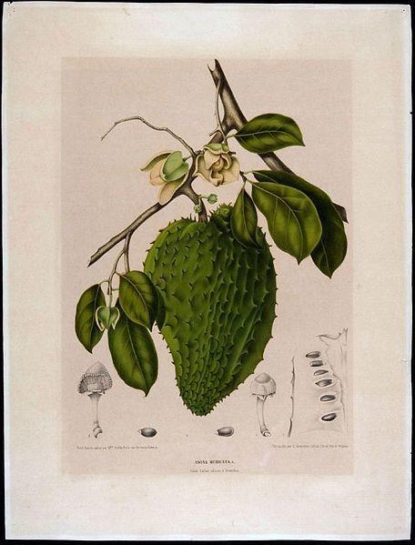 Fruits tropicaux de Colombie