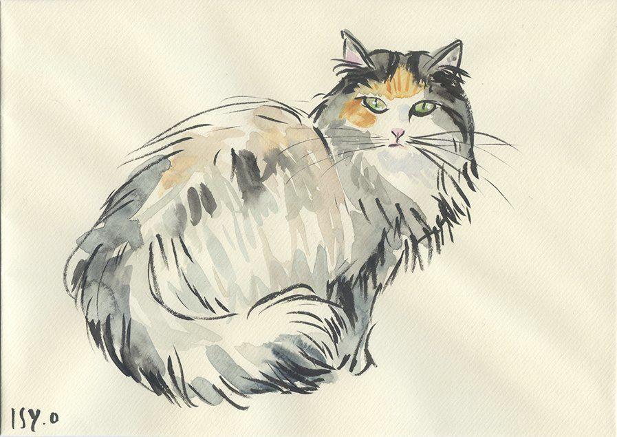 Anna, chat des forêts norvégiennes. Encre de Chine et aquarelle sur papier Vergé de France, 3/8 x 9 inch. © Isy Ochoa 2015