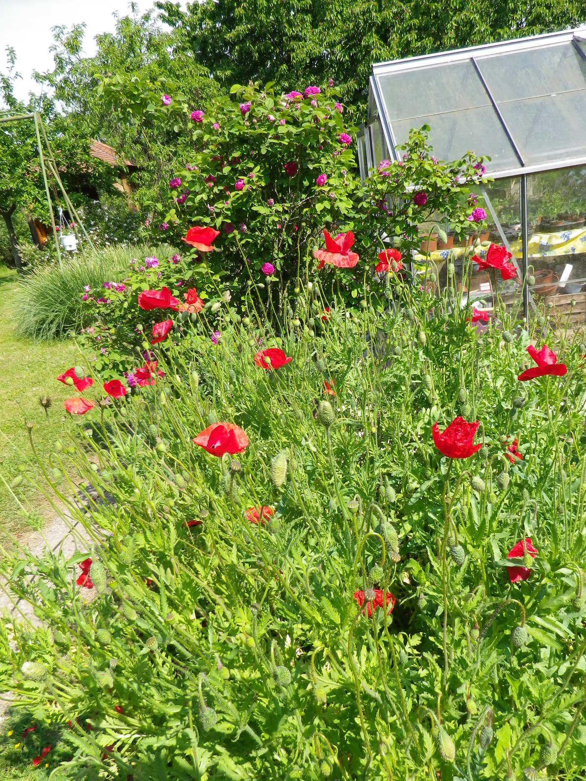 Dimanche matin dans le jardin le blog lamitebrantaise for Le jardin katalog 2015