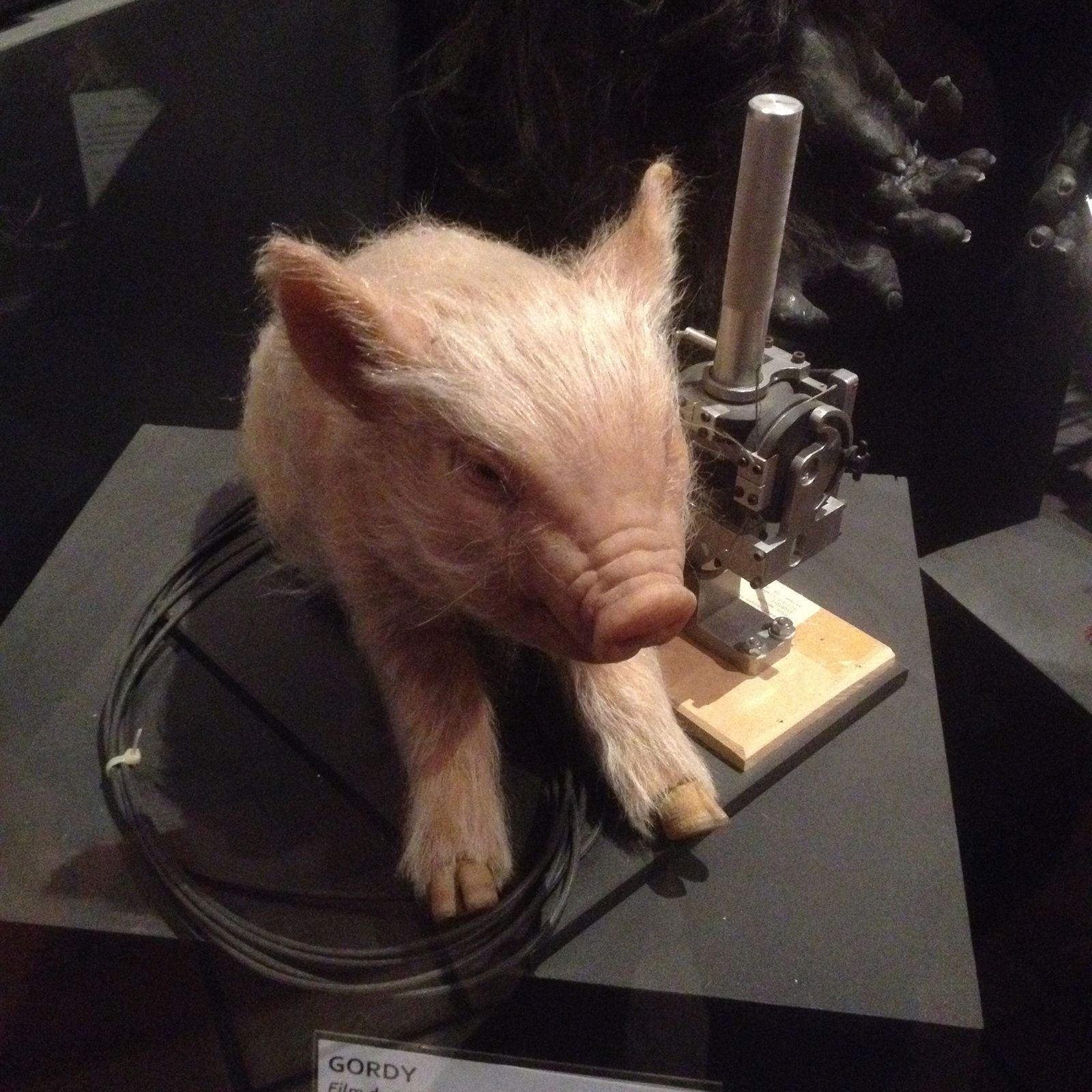 """Grosse déception. Le petit cochon de Gordy n'existait pas. Il s'agissait d'un cochon""""animatronique""""  reconstituant à l'identique le vrai cochon du film."""