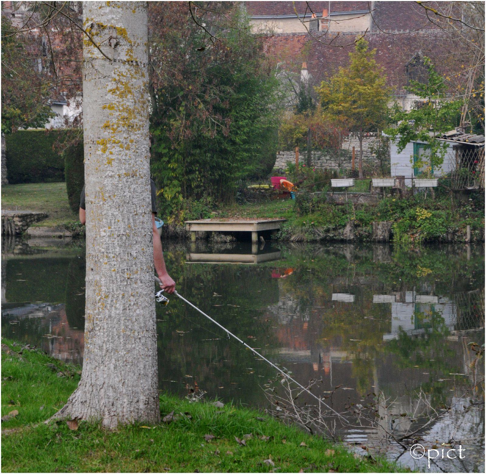 l'arbre qui pêche ...