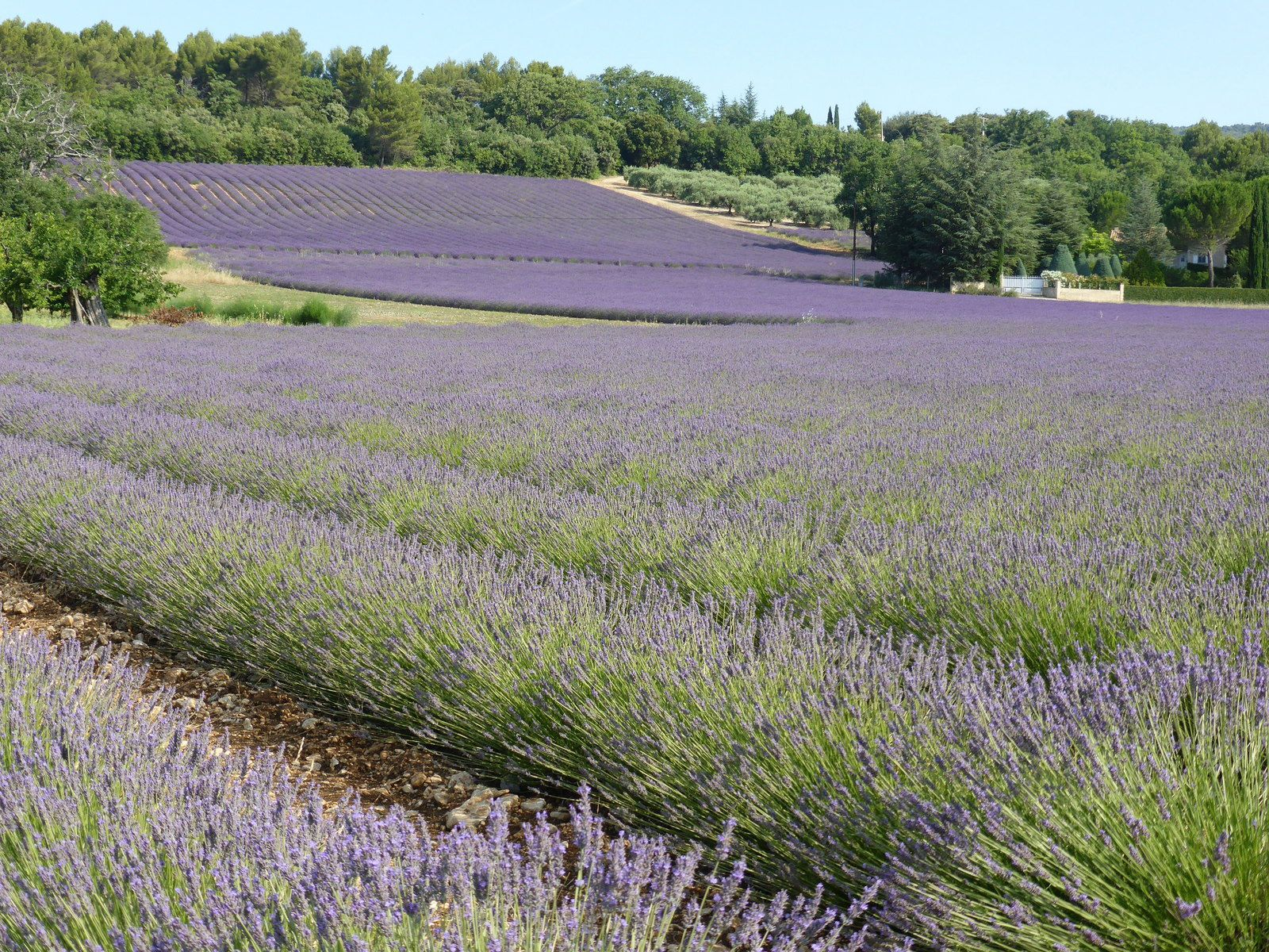 Provence (3)